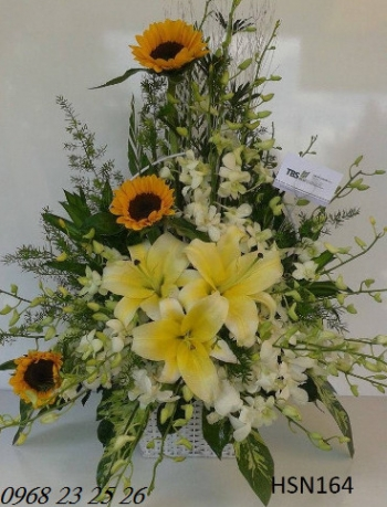 hoa sinh nhat hsn164